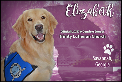 Comfort Dog at Trinity Lutheran Church Savannah