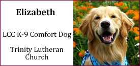 Elizabeth Comfort Dog at Trinity Lutheran Church in Savannah, GA